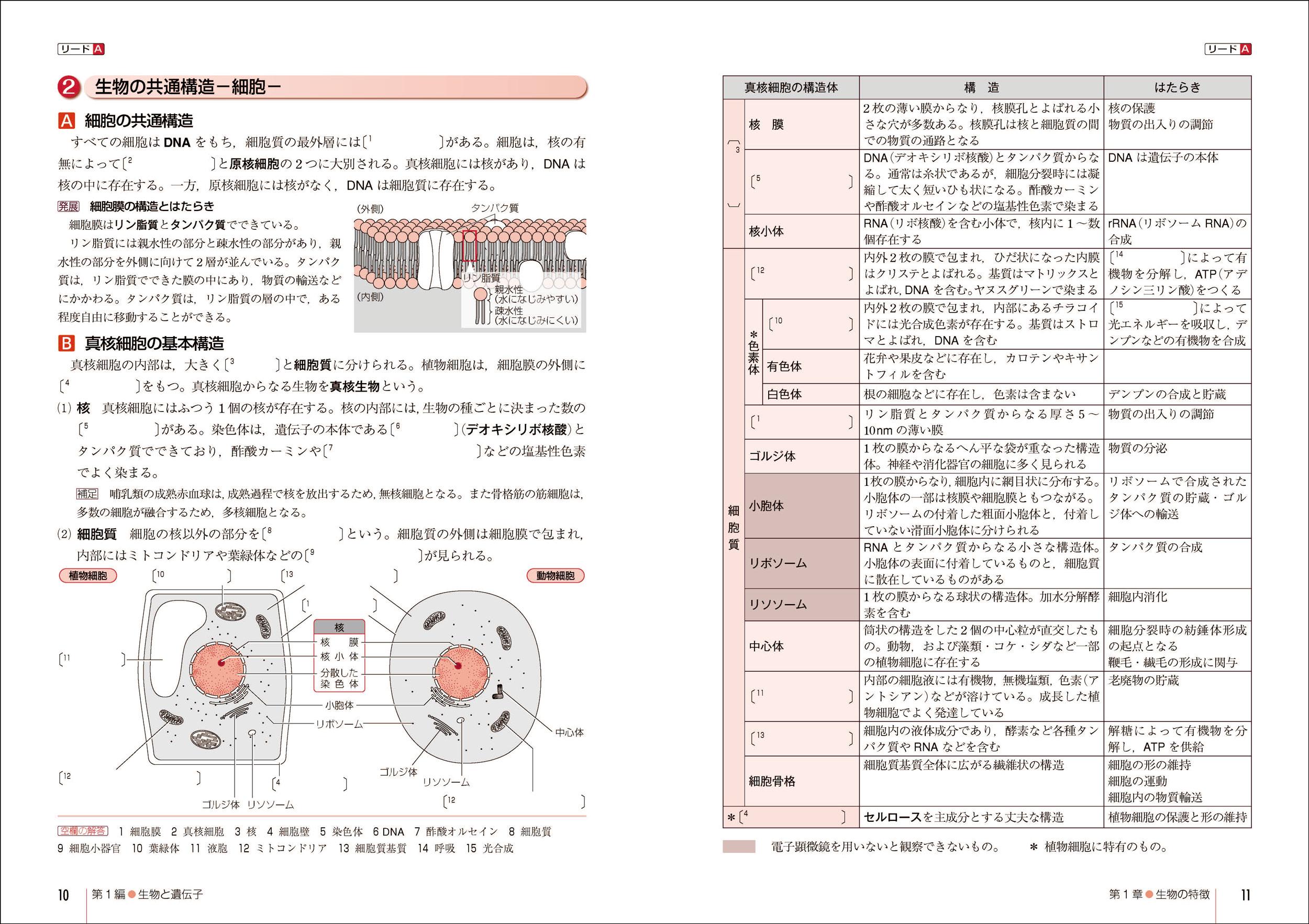 改訂版 リードLightノート生物 ... : 中学生 数学 問題集 : 中学